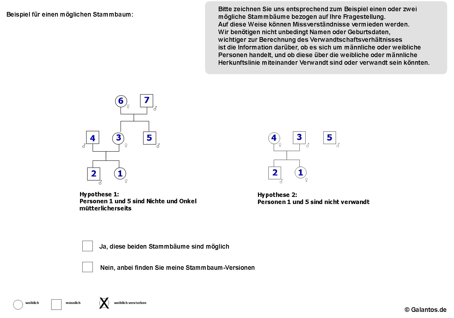 Schön Stammbaum Gliederung Vorlage Zeitgenössisch - Beispiel ...